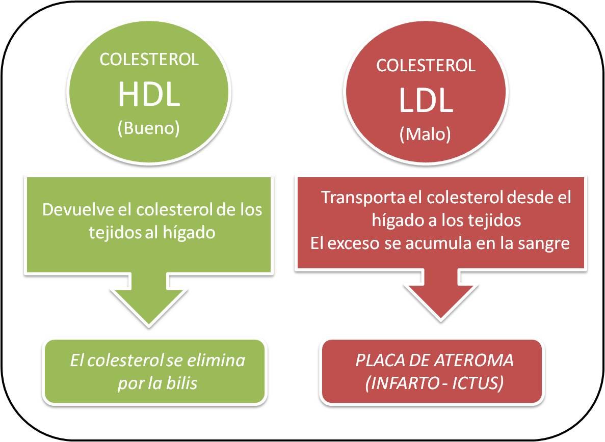 повышенный уровень холестерина беременности